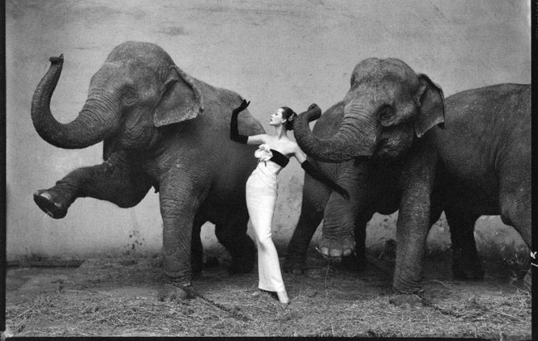 Richard Avedon-Dovima con elefantes vestida por Christian Dior-Cirque d Hiver-Agosto-1955